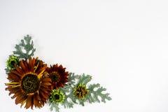 Blüht Zusammensetzungsbild Lizenzfreies Stockbild
