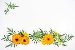 Blüht Zusammensetzungsbild Lizenzfreie Stockfotos