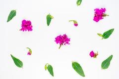 Blüht Zusammensetzungsbild Lizenzfreie Stockbilder