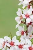 Blüte über grünem Hintergrund Stockfoto