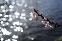 Blüte über Wasser Stockfotos