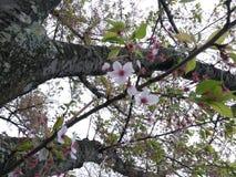 Blüte Stockfotografie
