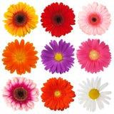 Blüte Lizenzfreie Stockfotos