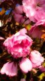 Blüte Stockfotos