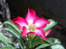 Blüte lizenzfreie stockbilder
