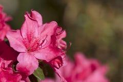 Blüte lizenzfreies stockfoto