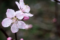 Blüte lizenzfreie stockfotografie