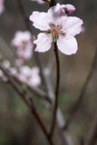 Blüte stockbilder