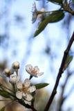Blüte lizenzfreies stockbild