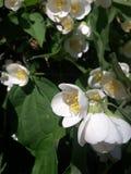 Blüte Stockfoto