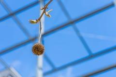 Blüte auf Baum Stahlbau auf Hintergrund Blüte auf Baum w Lizenzfreies Stockfoto