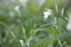 Blüte auf dem Gras Stockfotografie