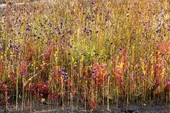 Blüte auf nassem Boden unter Blumengras Stockbilder