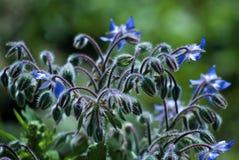 Blüte der Feldblumen Stockbilder