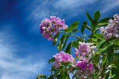 Blüte der rosa und weißen Blume stockbild