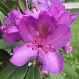 Blüte, in der Sie gepflanzt werden stockfotografie