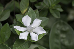 Blüte der weißen Blumen auf unscharfem Hintergrund Stockbilder