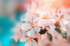 Blüte der weißen Blumen Schöner Blumenhintergrund… Hintergrund mit bunten Blumen stockfoto