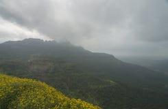 Blüte der wilden Blume bei Malshej Ghat im Monsun lizenzfreie stockfotografie