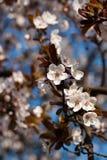 Blüte des Baums Stockbild