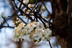 Blüte des Baums Stockbilder