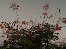 Blüte des Mondes Lizenzfreie Stockbilder