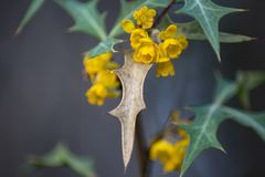 Blüte einer gelbe Blume lizenzfreies stockbild