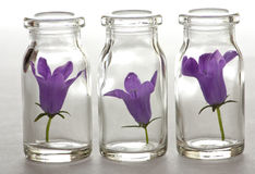 Blüte in einer Phiole lizenzfreies stockbild