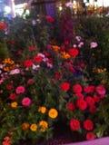 Blüte für mich Stockfoto