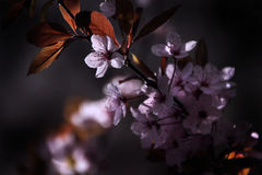 Blüte - Farben des Frühlinges Lizenzfreies Stockbild