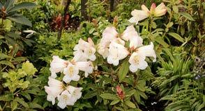Blüte, Frühling Lizenzfreie Stockbilder