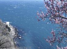 Blüte gegen das Meer lizenzfreies stockfoto