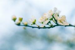 Blüte mit dem Staubgefässe Lizenzfreie Stockfotos