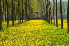 Blüte und Atmungsallergien Stockfoto