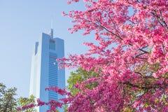 Blüte und Gebäude Stockbild