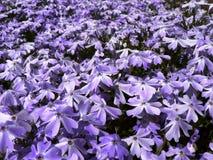 Blüten Lizenzfreie Stockfotografie