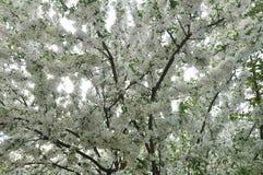 Blüten Lizenzfreies Stockbild