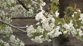 Blüten stock video footage