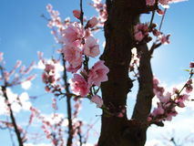 Blüten Lizenzfreies Stockfoto