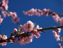 Blüten Lizenzfreie Stockbilder