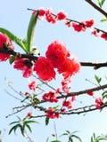 blüten Stockbild
