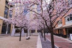Blüten-Ansichten um Birmingham-Stadtzentrum Großbritannien Lizenzfreies Stockbild