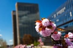 Blüten-Baum auf Kirchberg Lizenzfreie Stockfotos