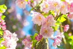 Blüten-Baum-Nahaufnahme Lizenzfreie Stockfotos