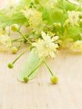 Blüten des Linden-Baums Lizenzfreies Stockfoto