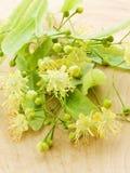 Blüten des Linden-Baums Lizenzfreie Stockfotografie