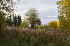 Blüten des Weide-Krauts im Herbstpark von Alaska, Fragment Stockfotos