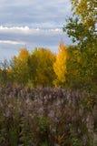 Blüten des Weide-Krauts im Herbstpark von Alaska, Fragment Lizenzfreie Stockfotos