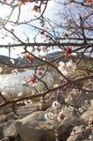 Blüten durch den Fluss lizenzfreies stockbild