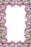Blüten-Feld Lizenzfreie Stockfotografie